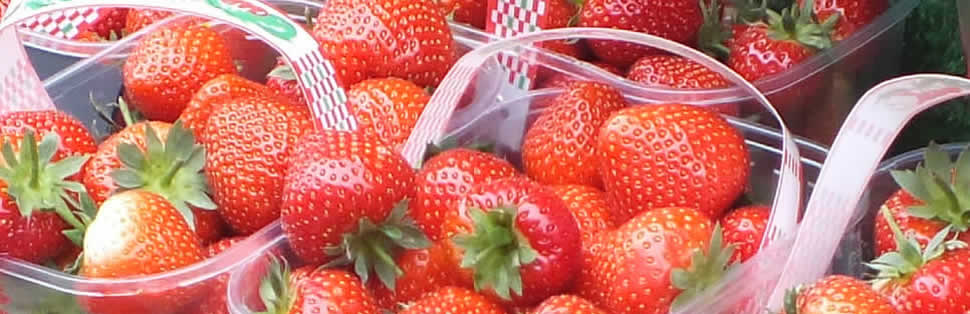 Lifton Strawberry Fields Farm Shop