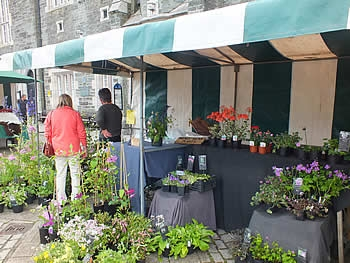 Wendy Hicks Plant Stall